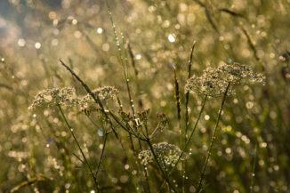 Sun through grass raindrops
