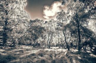 strath dulnain woods black and white quadtone