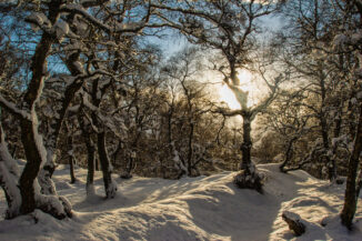 snow and light in trees, strathspey