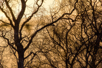 tree branches with sunset glow