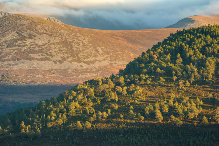Cairngorms and Rothiemurchus from Ord Ban