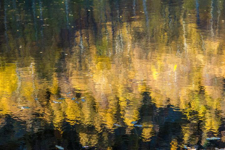 Golden birch refleced in Craigellachie lochan