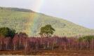 Loch nan Carraiagean ring cairn, aviemore