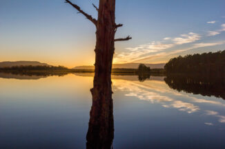 Old pine stump relections at Loch Mallachie sunset