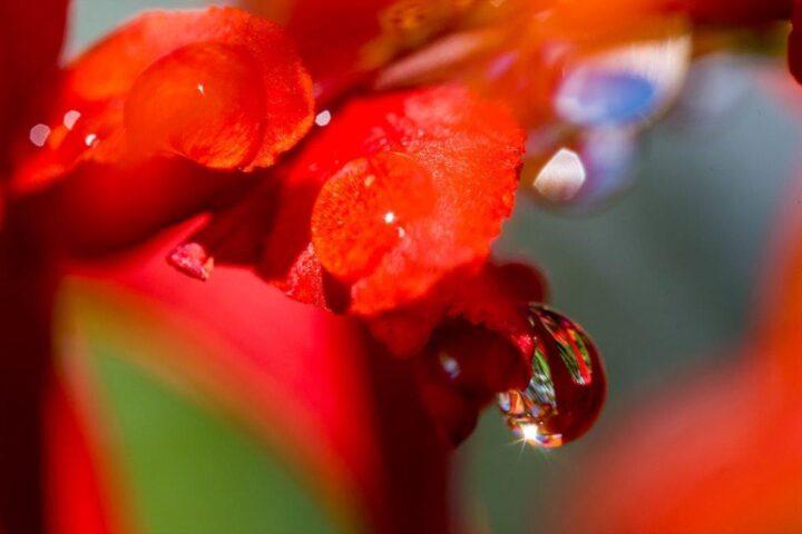 Crocomia flower and raindrops