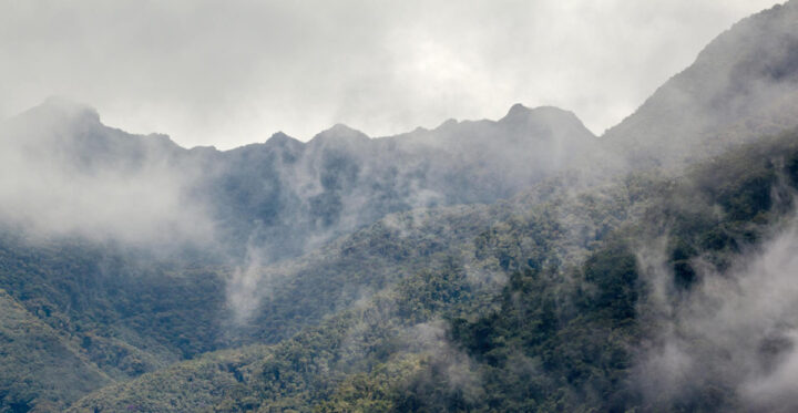 Cloudforest, Cocora Valley, Colombia